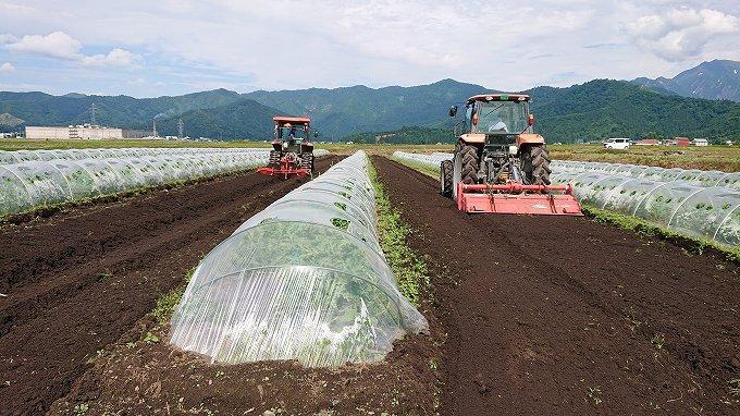 スイカ畑の管理作業